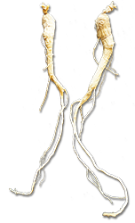 ginseng-root-250.png